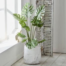 Sierplant Monstera groen